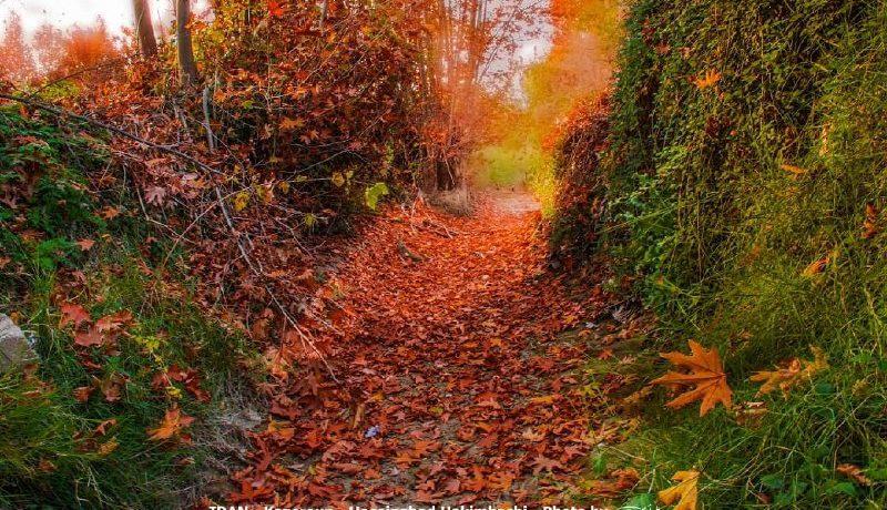Sehr schöne Bilder der Natur