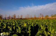ویژگیهای اقتصادی شهرستان کازرون
