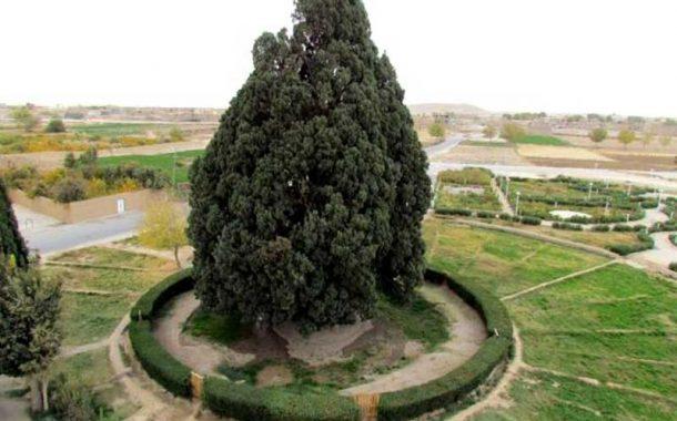 Kalani Cypress