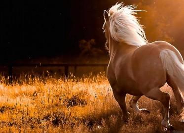 تصویر برداری از حیوانات